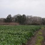 【求人情報】新しい農業をはじめよう〜パラダイスファーム木更津(木更津市)