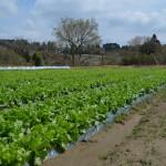 農作業後の家でのビールは格別〜「6/22 SUMMER DAY」耕す 木更津農場(木更津市)